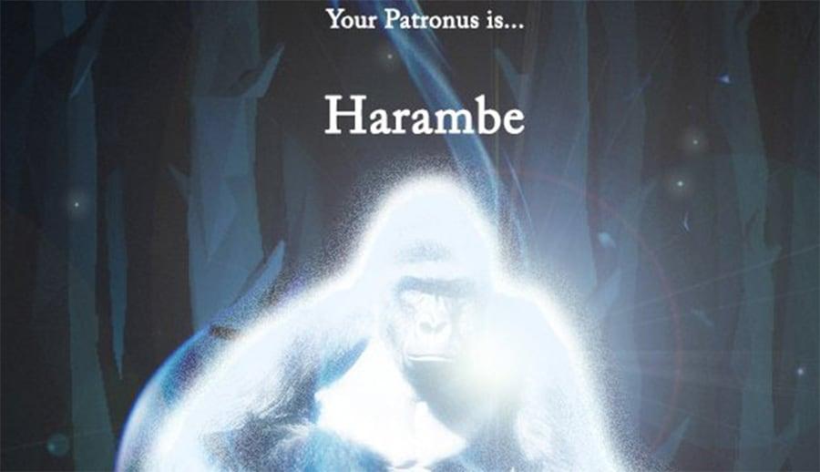 harambe